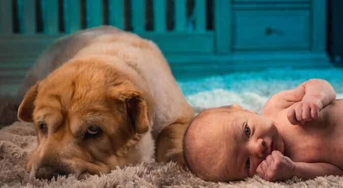 Cómo tener mascota y bebé al tiempo